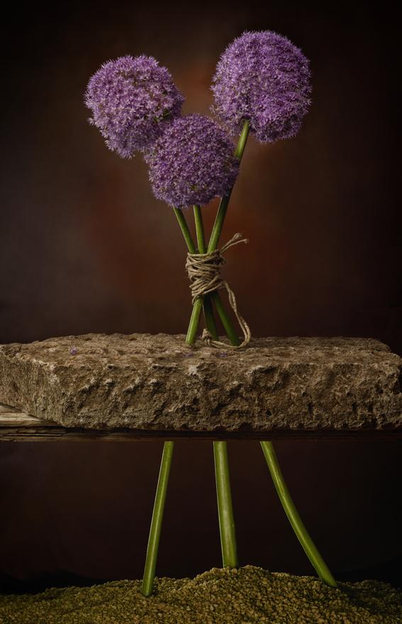 Allium nella pietra