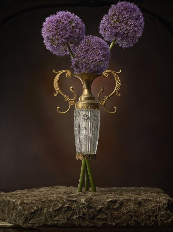 Allium nel vaso